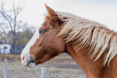 Profile of blue eyed horse head Stock Photo