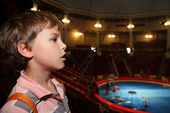 Profile of boy in circus looking at side. Profile of little boy in circus with blue arena looking at side Royalty Free Stock Photo