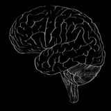 Profile of brain drawn in outline drawing style as the blank for Stock Image