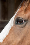 Profile of a Brown and White Horse. Close up profile of a brown horse with white markings stock image