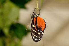 Profile of a butterfly Hanging of a hair stock image