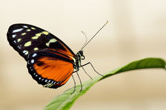 Profile of a butterfly on a leaf Stock Images
