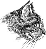 Profile of a cat Royalty Free Stock Images