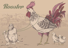 Profile of cock sketch Stock Photo