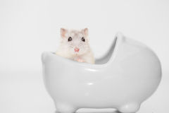 Profile of a cute hamster Stock Photo