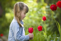 Profile of cute pretty smiling child girl with gray eyes and long hair smelling bright red tulip flower on blurred sunny summer. Green bokeh background royalty free stock photo