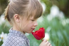 Profile of cute pretty smiling child girl with gray eyes and long hair smelling bright red tulip flower on blurred sunny summer. Green bokeh background royalty free stock images