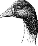 Profile of goose Royalty Free Stock Photos