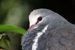 Bird profile. A profile of this grey and white bird royalty free stock image