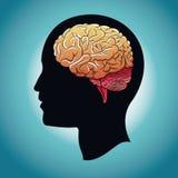 Profile head brain human. Illustration eps 10 Stock Images