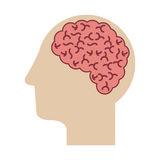 Profile head with human brain Royalty Free Stock Photography