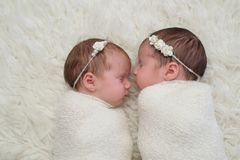 Swaddled Newborn Twin Baby Girls. Profile headshot of two fraternal twin newborn baby girls sleeping and swaddled in white royalty free stock photography