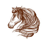 Profile of horse with flowing mane, sketch style Stock Photos