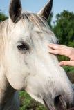 Profile of horse head Stock Photo