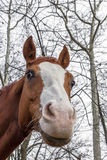 Profile of a horse Stock Images