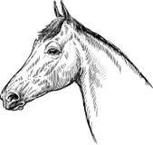 Profile of horse Stock Photos