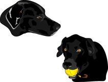 Profile illustration of Black Labrador retreivers. Illustration of Coal, and Panther, father and daughter , black Labrador retrievers. Companions and give Royalty Free Stock Photos