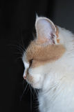 Profile of lady-cat. On a dark background Royalty Free Stock Images
