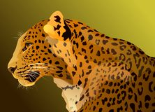 Profile leopard Stock Photography