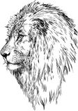 Profile of a lion. Vector drawing of a lions head Royalty Free Stock Photos