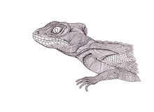 Profile Lizard. Hand drawn.Graphic style Royalty Free Stock Images