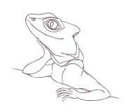 Profile Lizard. Hand drawn.Graphic style Stock Photo