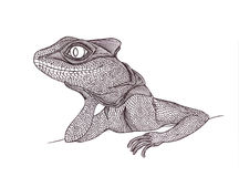 Profile Lizard. Hand drawn.Graphic style Royalty Free Stock Photo