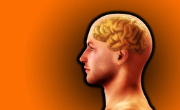 Profile Of Man With Brain 8. Image of a mans head, for thought and medical concepts Royalty Free Stock Image