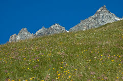 Profile mountainous, Aosta Valley. Flower meadow and moutain profile of blue sky background, Aosta Valley royalty free stock image