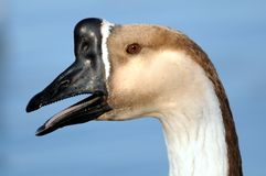 Free Profile Of Goose Royalty Free Stock Photo - 23428645
