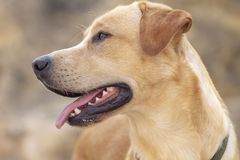 Profile picture of a dog royalty free stock photography