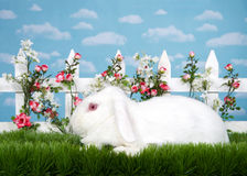 Profile portrait albino white bunny in garden Royalty Free Stock Photography