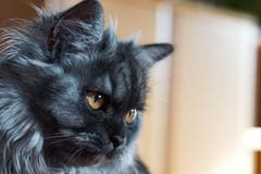 Profile portrait of black cat