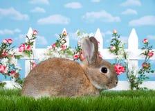 Profile portrait brown dwarf bunny in flower garden Royalty Free Stock Image