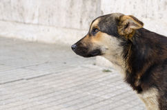 Profile portrait of a dog with no owner. Stray mongrel dog Stock Image