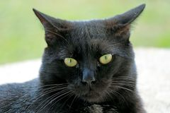Profile portrait of a lovely black cat on Easter Island, Chile, South America royalty free stock image