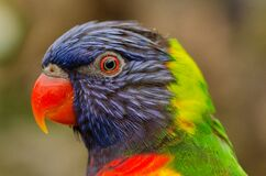 Profile portrait of parrot Royalty Free Stock Image
