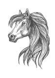 Profile portrait of purebred andalusian mare icon Stock Image