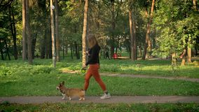 Profile portrait of young woman walking with cute corgy dog on a leash in green park. stock video