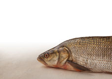 Profile of raw fish. Raw fish on the kitchen table Royalty Free Stock Photography