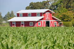 Profile Red Barn in Cornfield Stock Photography