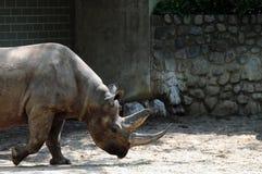 Profile of rhinoceros Stock Photography