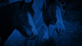Horses In The Field At Night stock footage