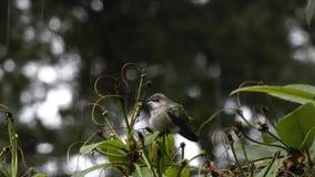 Profile of small green hummingbird sitting on branch
