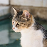 A profile view of a cat Stock Photography