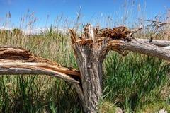 Broken tree trunk. Profile view of completely broken tree trunk Stock Image