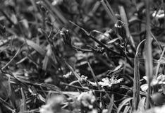 Profilera sikten, makrofoto av en blommafluga som är sugande nektar från en liten vildblomma Royaltyfri Fotografi