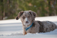 Profili del cane Fotografia Stock