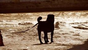 Profili il cane pericoloso del cane di combattimento legato ad un guinzaglio dell'albero cane di combattimento di inverno il prob video d archivio
