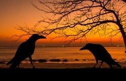 Profili il corvo e l'albero morto al tramonto per il fondo di Halloween Fotografie Stock Libere da Diritti